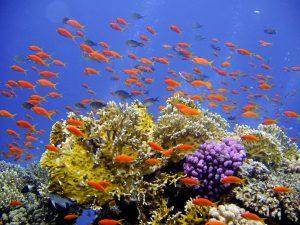 diving-694689_1280