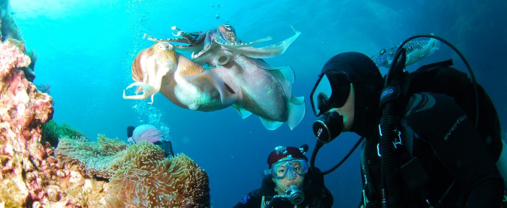 diving-689831_1920