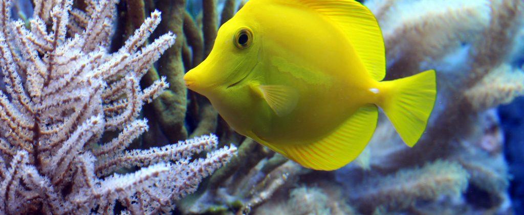 fish-2921430