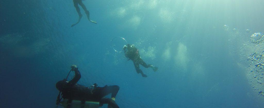 scuba-diving-2059169_1920