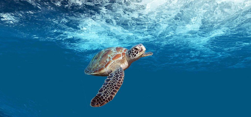 turtle-4032570_1280